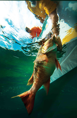 Underwater Fish Lift, Bahamas