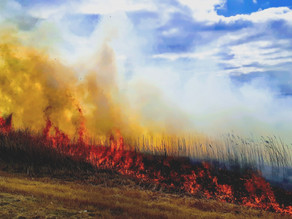 Stubble Burning: The Need for a Behavioural Lens