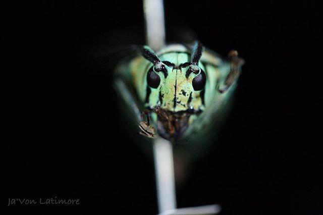 Goodmorning #entomologist #coleoptera #m