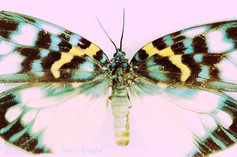 Some color for your day #entomologist #m