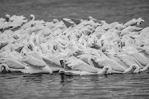 White -6907.jpg