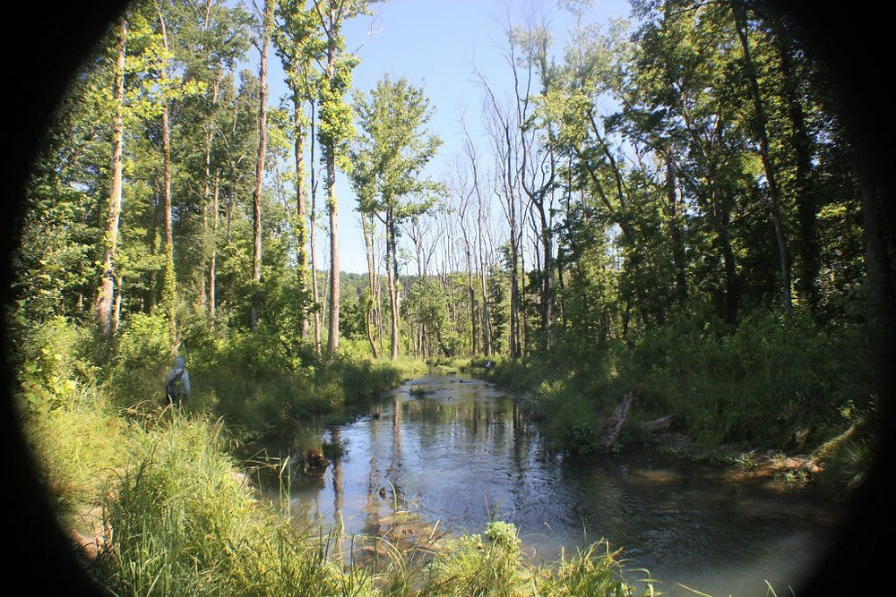 Hatchery Creek