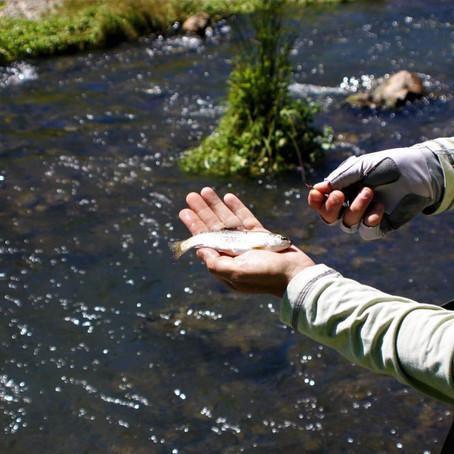 Kentucky's Hatchery Creek is a fly fishing adventure park
