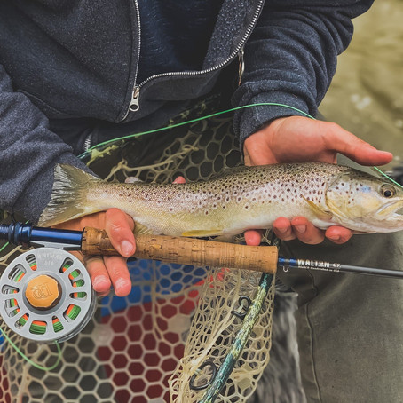 These 4 Colorado fly fishing rivers equal instant success