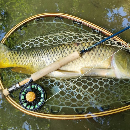 Fly Fishing for Carp is More Than What You Think