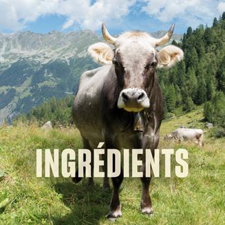 ingredients-square.png