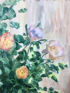 Lockdown Roses