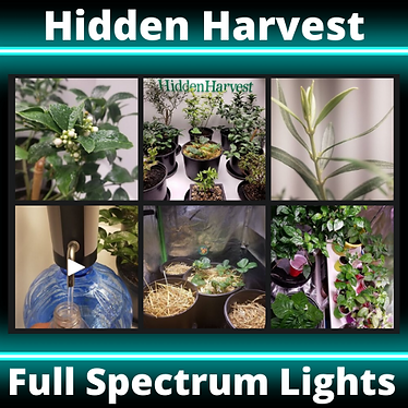 Hidden Harvest.png