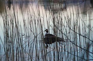 duck-5129522.jpg