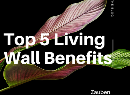 The Top Five Living Wall Benefits