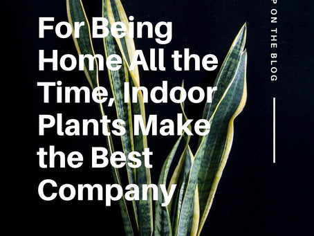 For Being Home All the Time, Indoor Plants Make the Best Company