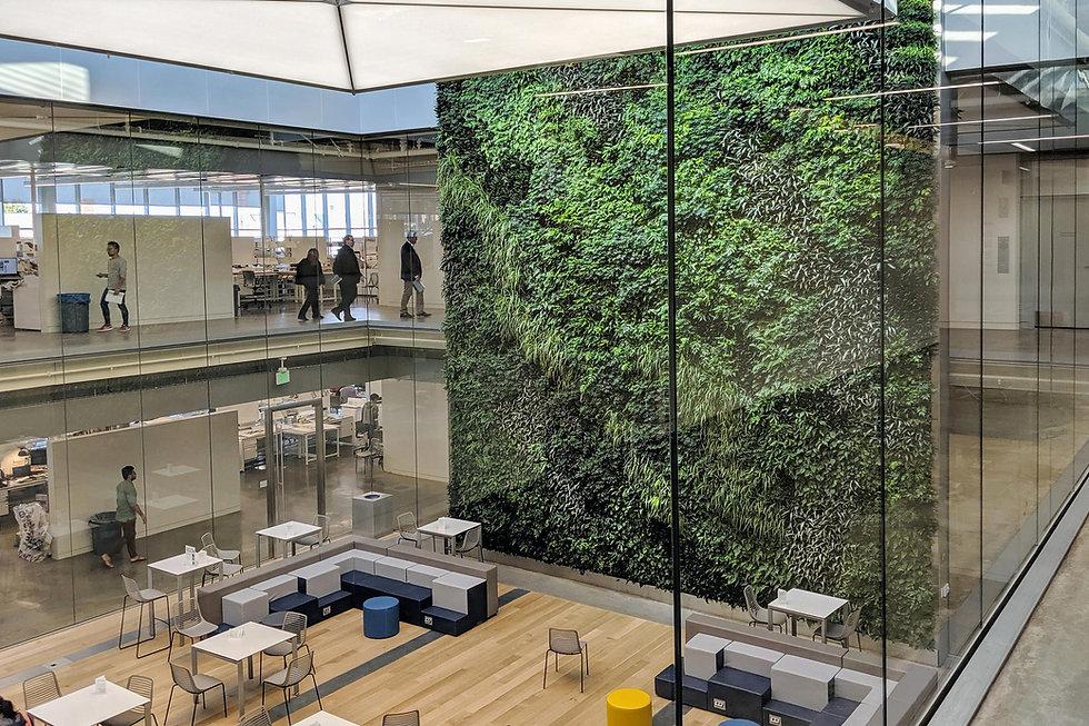 Washington University Indoor Living Wall