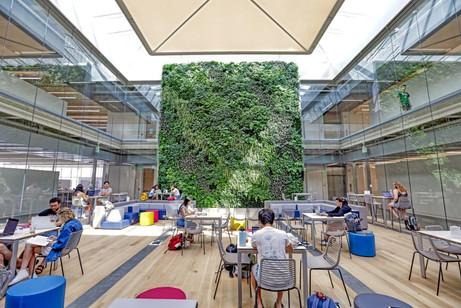 Washington University Living Wall.jpg