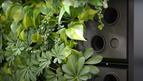 Hydroponic Living Wall System.jpg