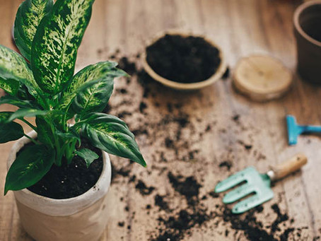 A guide to re-potting.