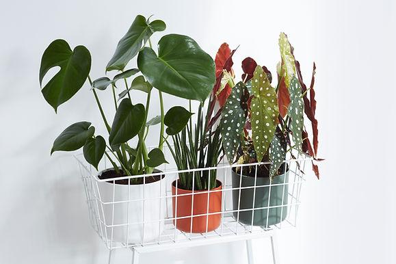 Eco friendly plant pots 16cm