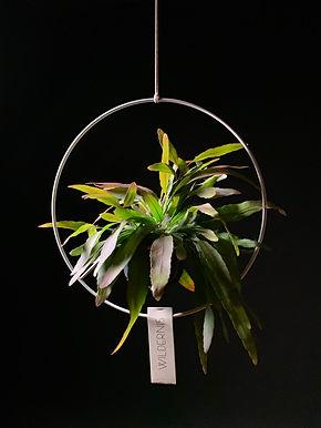 Wildernis 'Halo' Plant Hanger
