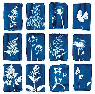 Cyanotype Botanical Print Card Pack