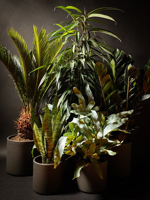 Houseplant Subscription