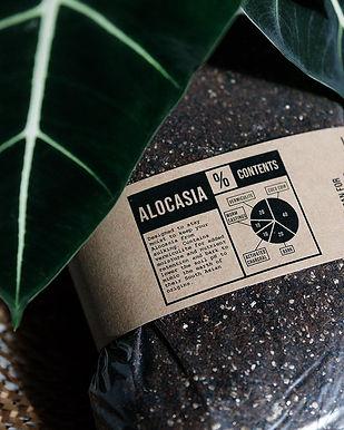 Alocasia Soil Mix 2.5 Litre