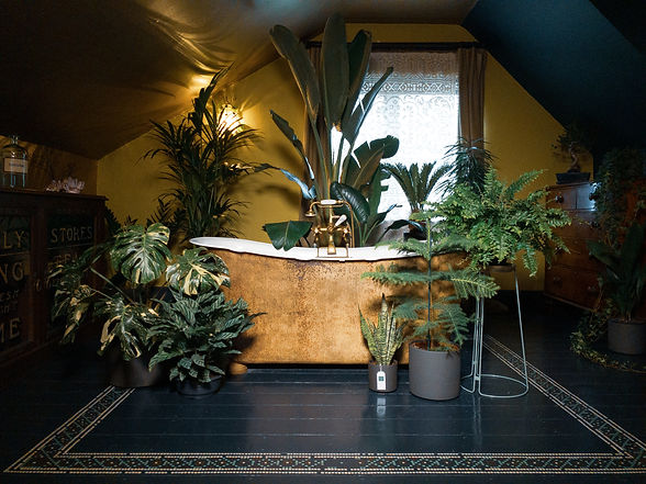 The Plant Den Bathroom Consultation_1.JP