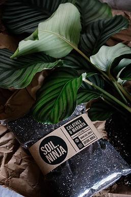 Calathea & Maranta Soil Mix 2.5 Litre