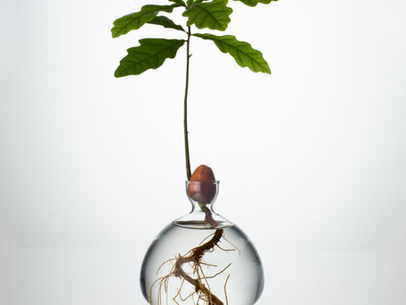 Let's start a tree growing revolution!