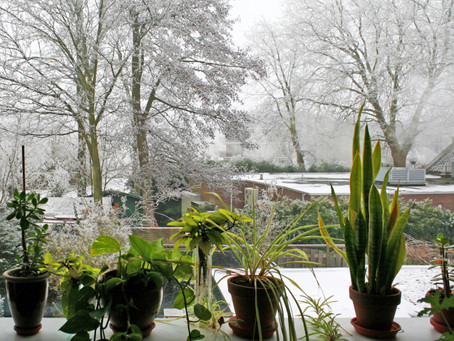How to help your houseplants through the Winter.