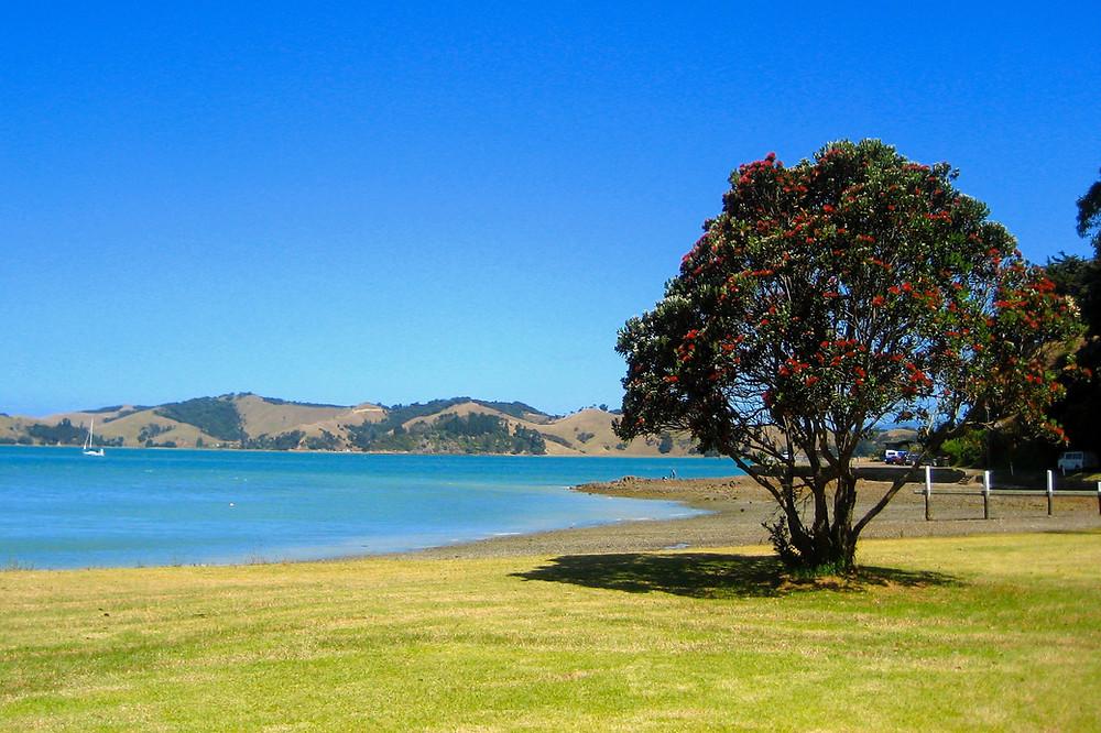 Return to Love NZ - Blog - What does Christas offer us? Pohutakawa tree