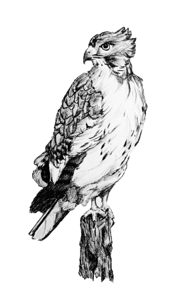 Hawk (2016)