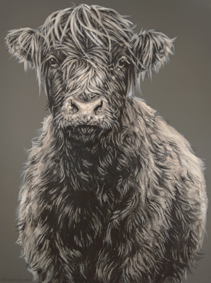 Young Highland - £1100