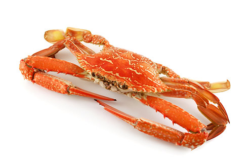 COOKED BLUE SWIMMER CRAB PER KG (Average Size 250g)