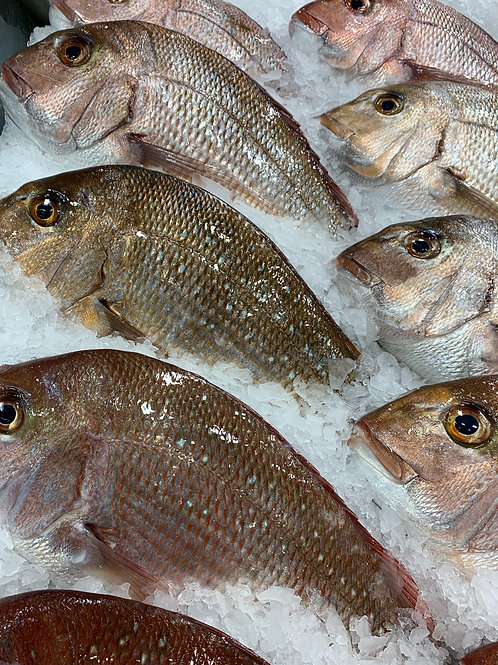 SNAPPER 1kg, 2kg or 3kg Whole Fish