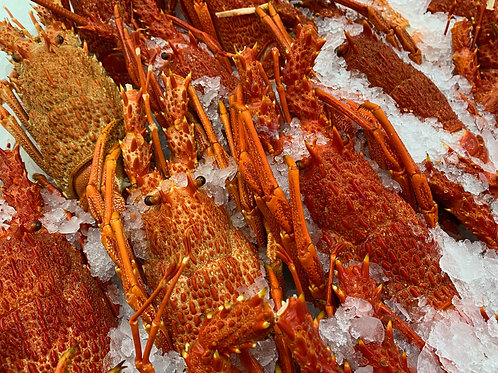COOKED SOUTHERN ROCK LOBSTER PER PIECE (Average Size 900g)