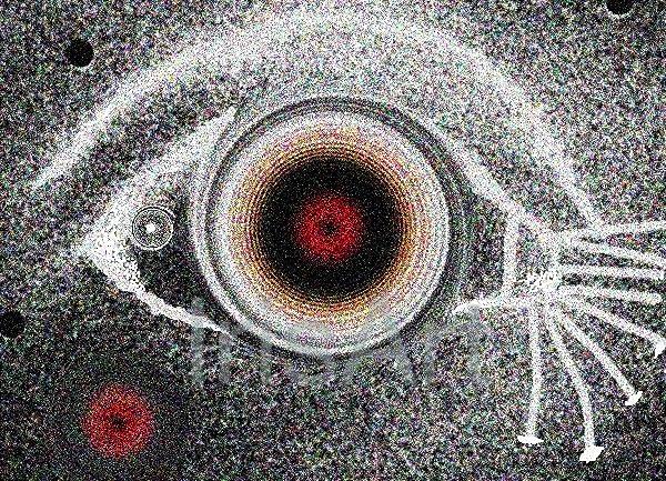 radio fish eye