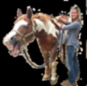 Equine Acupressue