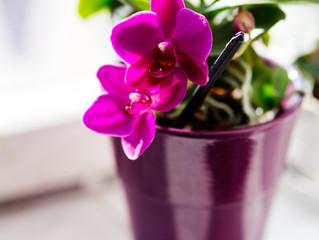 A szobanövényekről - a hőmérséklet szerepe
