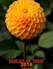 Dahlias of Today 2016