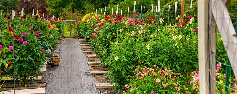 garden-header2.png