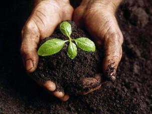 Soil Presentation Recap