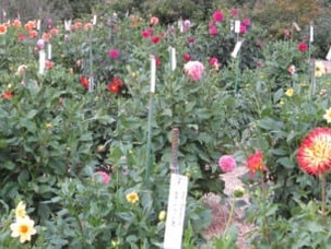 Trial Garden Planting