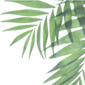 palms news.PNG