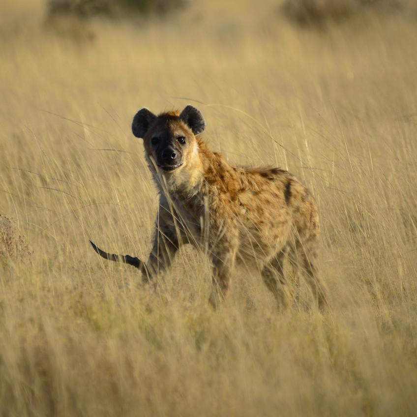 ETHIOPIA / Part III: Hyena Slobber