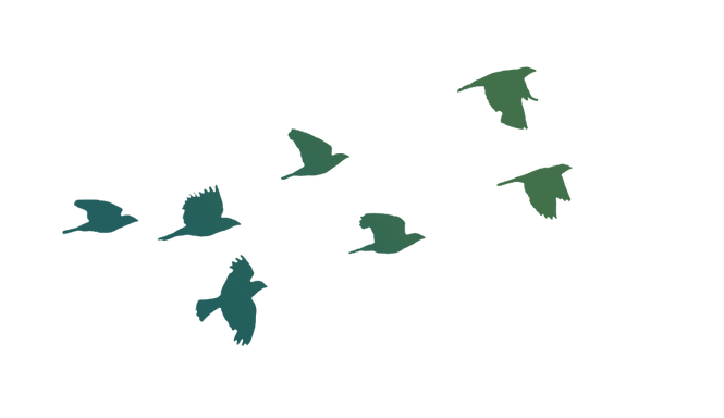 flying-bird-clipart-bird-png-611430-5650