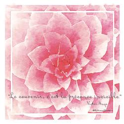 Fleur rose Hugo