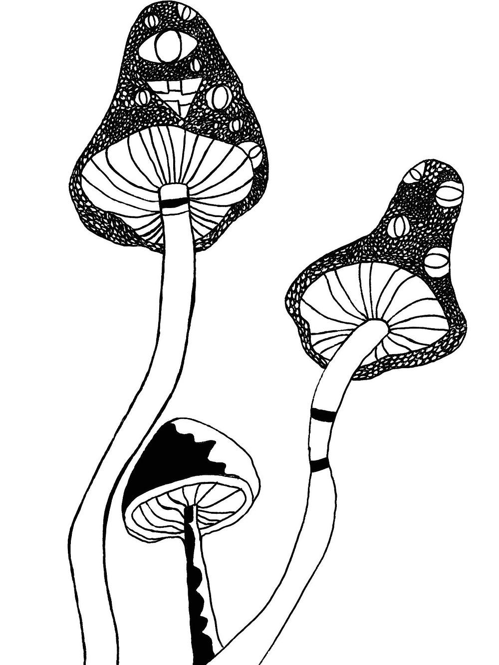 midnight mushrooms