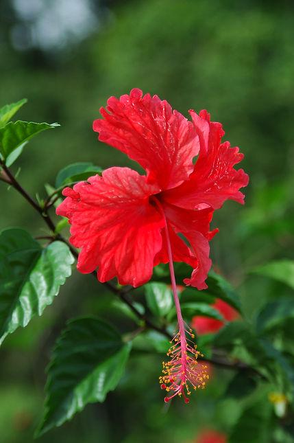 Costa Ricas Blumenpracht