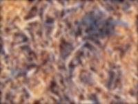 kk_closeup.jpg