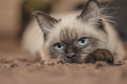 adorable-animal-brown-161005.jpg