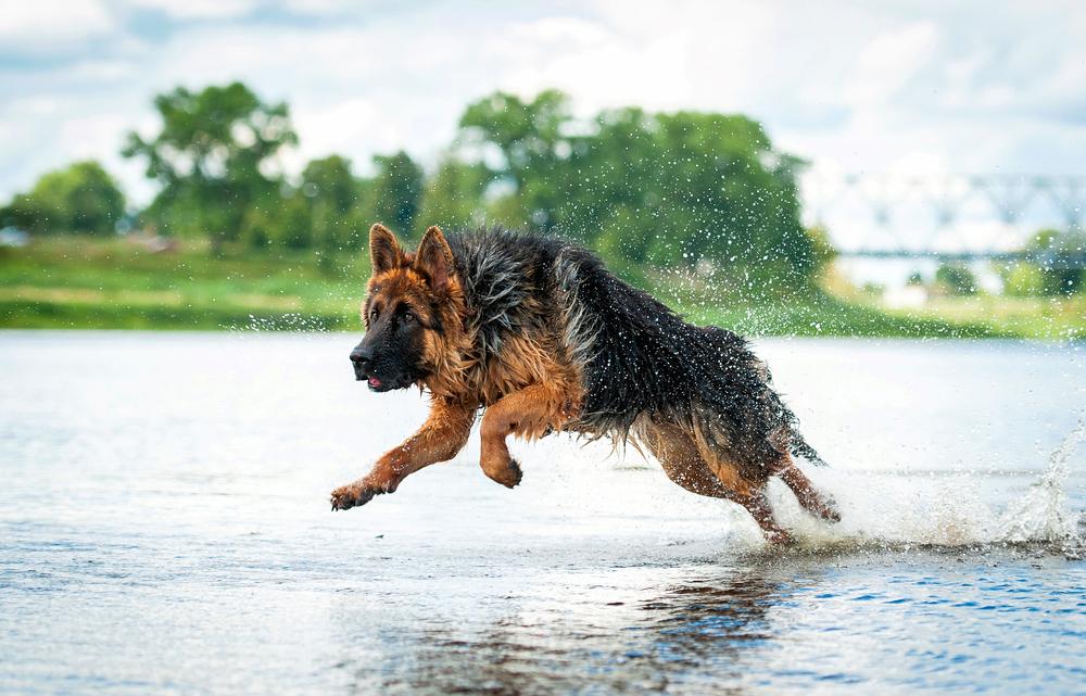 National Dog Day | Celebrating Dogs